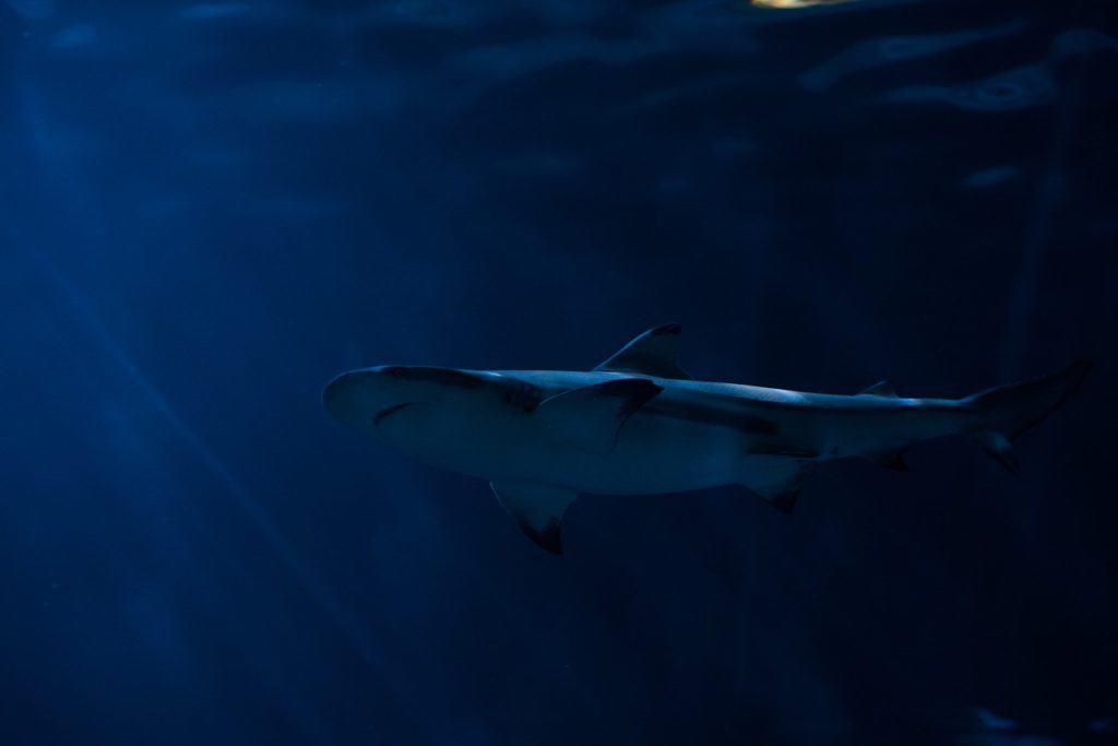 Best Underwater Drones of 2020