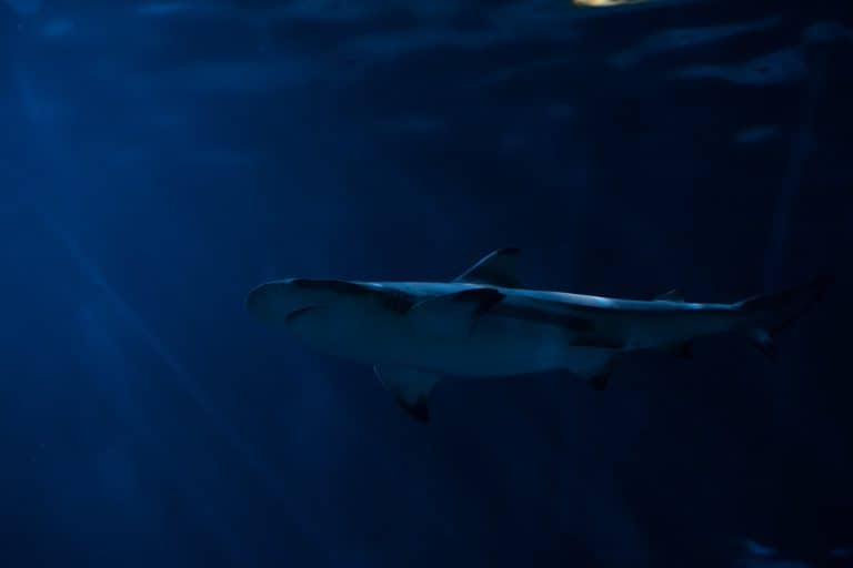 exploring with underwater drones